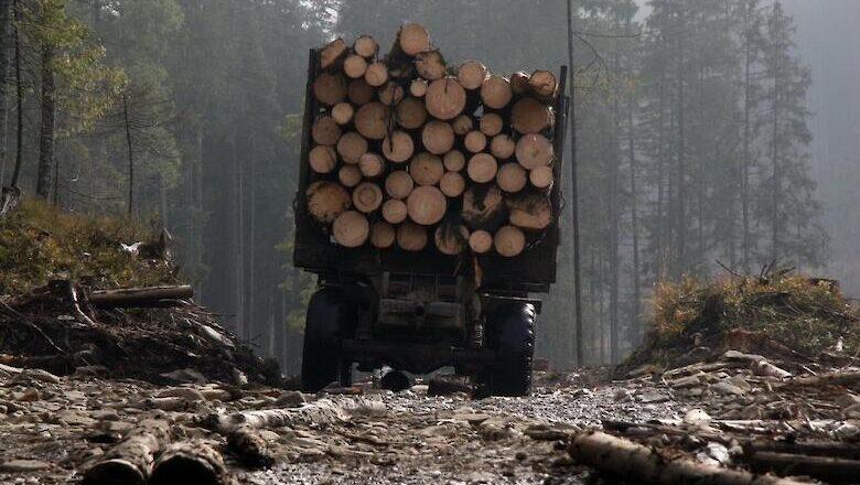 В Україні можуть зняти мораторій на експорт лісу – Держлісагентство