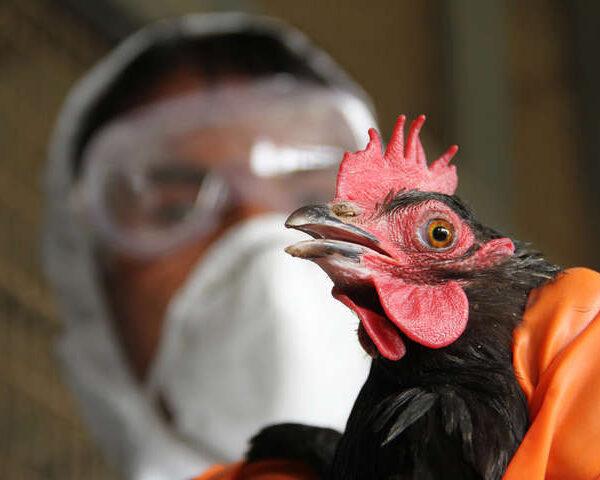 У Миколаївській області Держпродспоживслужба зафіксувала спалах пташиного грипу