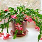 Чотири кімнатних рослини, які цвітуть восени і взимку